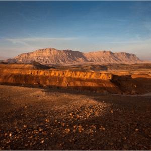 חברת טיולים בארץ ארז ישראל