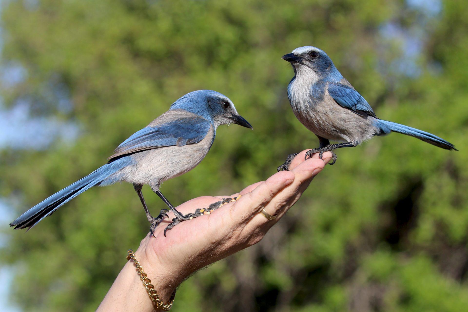 עין אפק –  כל הציפורים מדברות על זה
