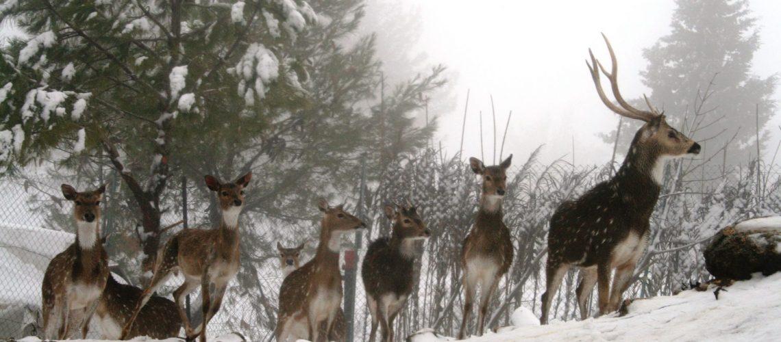 חוות ארץ האיילים- קרדיט גרשון אלינסון