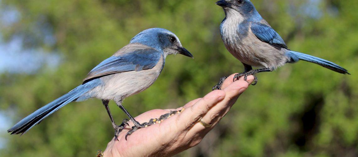 animals-avian-beaks-1036861 (1)